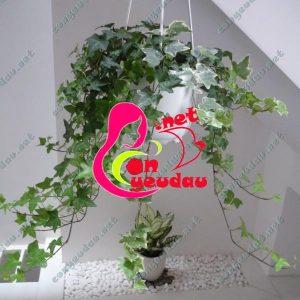Bí quyết chăm sóc để cây cảnh trong nhà luôn xanh tươi