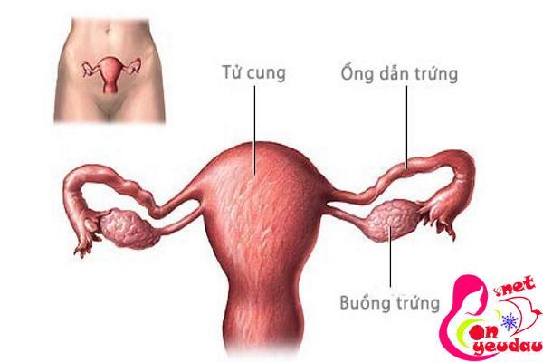 Sau khi cắt bỏ một bên buồng trứng có ảnh hưởng gì đến khả năng sinh sản không?